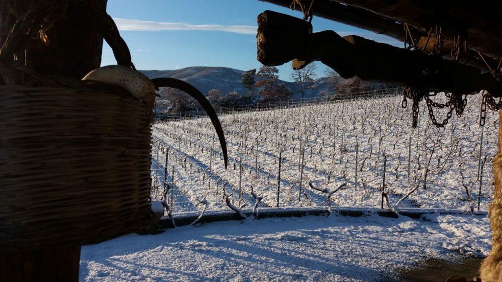 Cantina Gungui imbiancata dalla neve Gennaio 2019