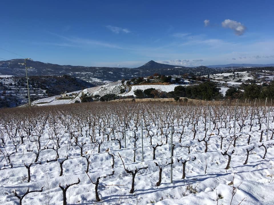 Pub Agricolo Mamoiada vigne imbiancate dalla neve Gennaio 2019