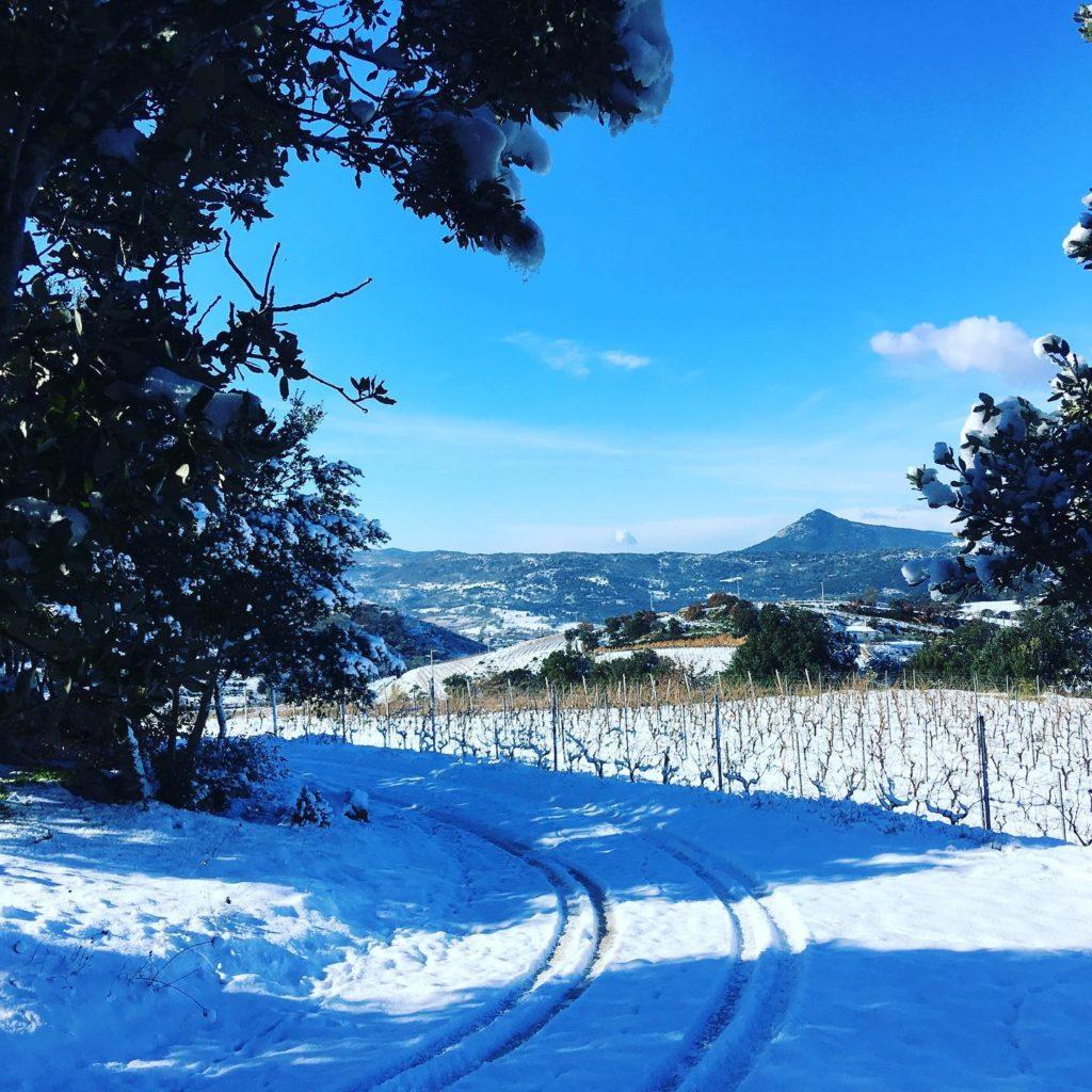Pub Agricolo vigne sotto dalla neve  a Gennaio 2019